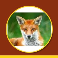 Meaning Of Foxy
