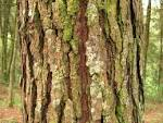 bark meaning in hindi bark in hindi definition and